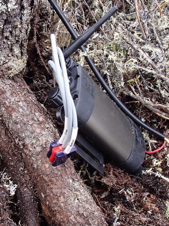 Sap flow meter - in tree roots - Alaskan Tundra