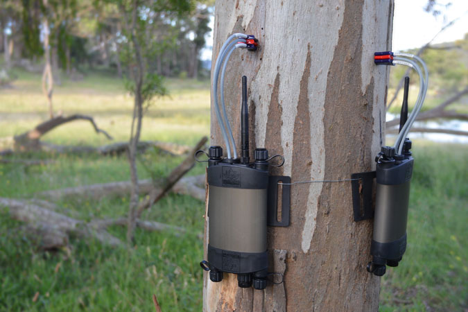Multiple sap flow meters monitoring tree water usage